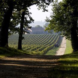 domaine Rothschild